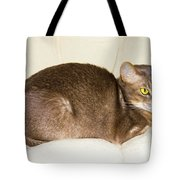Abyssinian Cat On Chair Pillow, Symbol Of Comfort Tote Bag