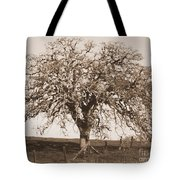 Acacia Tree In Sepia Tote Bag