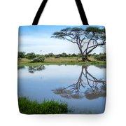 Acacia Tree Reflection Tote Bag