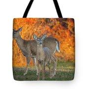 Acadia Deer Tote Bag