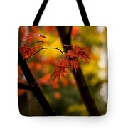 Acer Silhouette Tote Bag