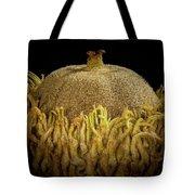Acorn Emerging Tote Bag