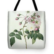 Adelia Aurelianensis Tote Bag by Pierre Joseph Redoute