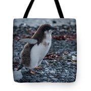 Adelie Penguin Chick Running Along Stony Beach Tote Bag