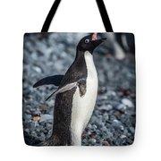Adelie Penguin Squawking On Grey Shingle Beach Tote Bag