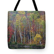Adirondack Birch Foliage Tote Bag
