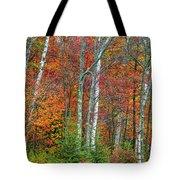 Adirondack Birches In Autumn Tote Bag