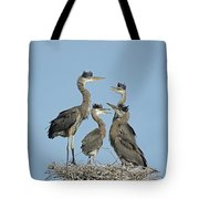 Adolescent Great Blue Herons Tote Bag