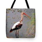 Adolescent Ibis Tote Bag