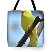 Adorable Face Of A Yellow Budgie Parakeet Tote Bag
