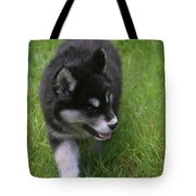 Adorable Fluffy Alusky Puppy Walking In Tall Grass Tote Bag