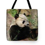 Adorable Giant Panda Bear Eating Bamboo Shoots Tote Bag