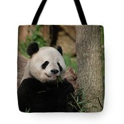 Adorable Giant Panda Eating A Shoot Of Bamboo Tote Bag