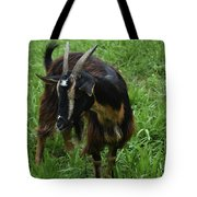 Adorable Goat In A Field With Thick Green Grass Tote Bag