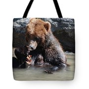 Adorable Grizzly Bear Playing With A Maple Leaf While Sitting In Tote Bag