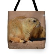 Adorable Pair Of Chubby Black Tailed Prairie Dogs Tote Bag