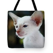 Adorable Siamese Cat Tote Bag