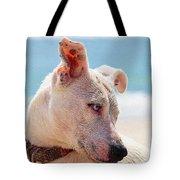 Adorable Small Dog On The Beach Tote Bag