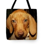 Adorable Vizsla Puppy Tote Bag