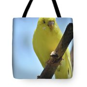 Adorable Yellow Budgie Parakeet Bird Close Up Tote Bag