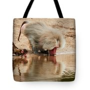 Adult Baboon And Baby Together On The Waterfront  Tote Bag