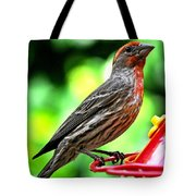 Adult Male House Finch Tote Bag