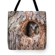 Adult Saw-whet Owl Tote Bag