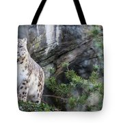 Adult Snow Leopard Standing On Rocky Ledge Tote Bag