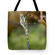 Aeshna Mixta Dragonfly Tote Bag