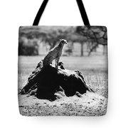 Africa: Cheetah Tote Bag