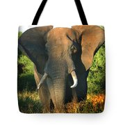 African Bull Elephant Tote Bag