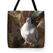 African Collared Dove 3 Tote Bag