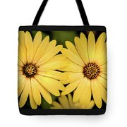 African Daisy-twice Tote Bag