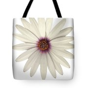 African Daisy With White Petals Tote Bag