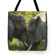 African Elephants Loxodonta Africana Tote Bag