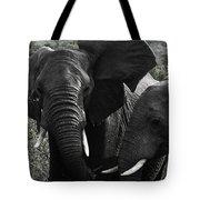 African Elephants Tote Bag