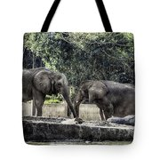 African Elephants_hdr Tote Bag