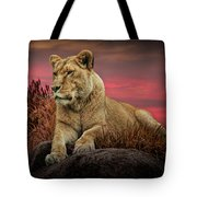 African Female Lion In The Grass At Sunset Tote Bag