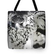 African Hawk Eagle 2 Tote Bag