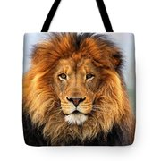 African Lion 1 Tote Bag