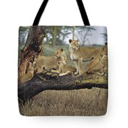 African Lion Panthera Leo Family Tote Bag by Konrad Wothe