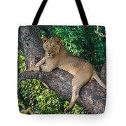 African Lion Panthera Leo On Tree, Lake Tote Bag