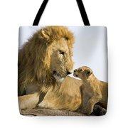 African Lion Panthera Leo Seven Tote Bag