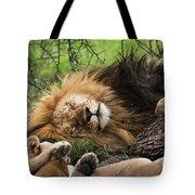 African Lion Sleeping In Serengeti Tote Bag