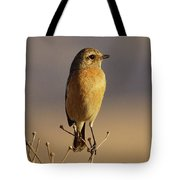 African Stone Chat Female Tote Bag