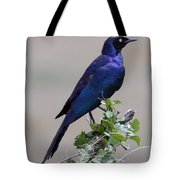 African White Eye Starling Tote Bag