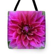 After The Rain - Purple Dahlia Tote Bag
