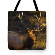 After The Rut Tote Bag by Barbara Schultheis