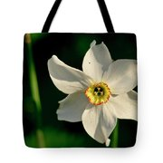 Afternoon Of Narcissus Poeticus. Tote Bag