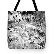Afternoon Sunlight With Stars Tote Bag